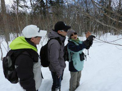 冬の森の観察会