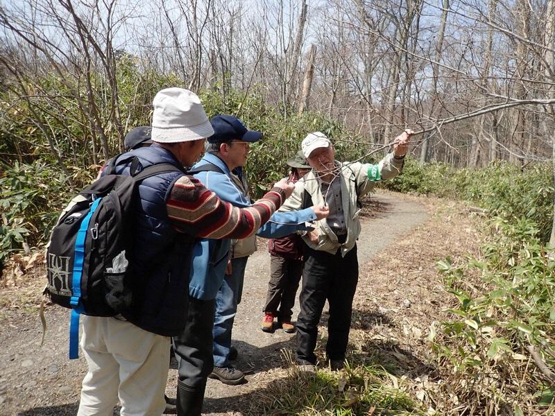 自然観察会「春の花を見つけよう」