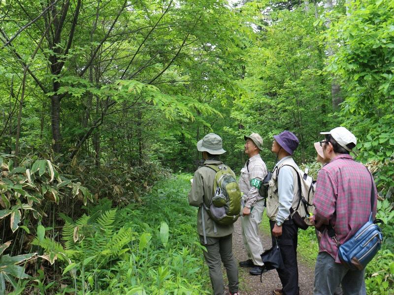 自然観察会「森の新緑観察会」