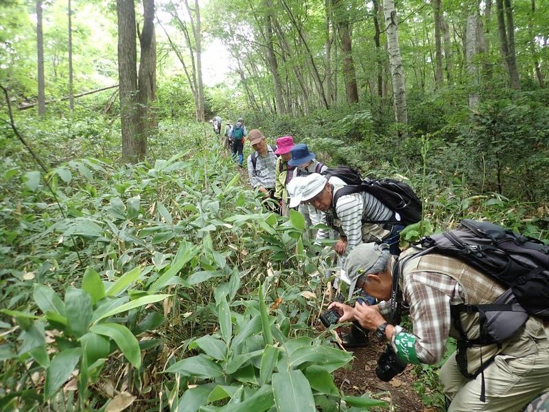 自然観察会 「夏の森の観察会」