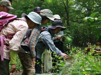 自然観察会「秋の花でにぎわう森を歩こう」