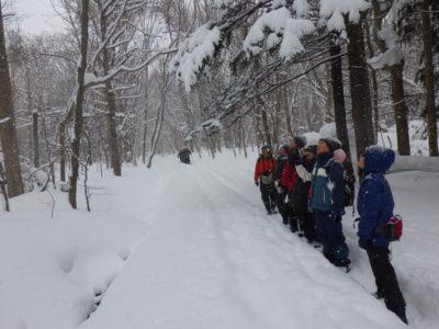 自然観察会「冬の森の観察会」
