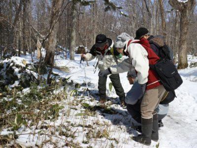 《中止》 自然観察会「森の中で春をさがそう」