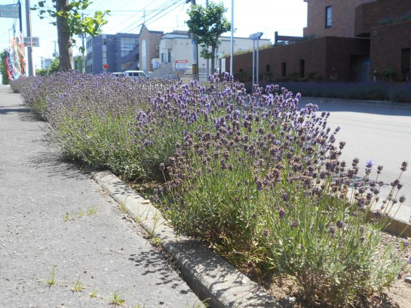 花のある街並みづくり写真展≪市民会館での開催は中止≫